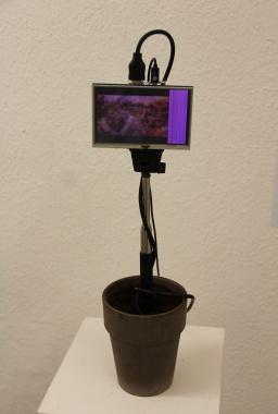 "Oliver Orthuber, ""Blumenmaschine"""